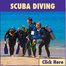 Lahaina Harbor Scuba Diving link