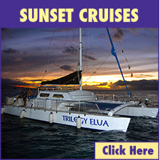 Lahaina Harbor Sunset Cruises link